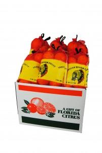 Citrus 6 Pack