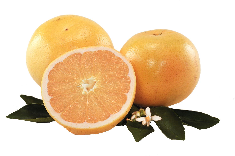 Golden White Grapefruit