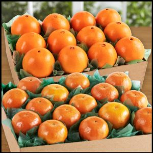 florida-tangerines-navels-tray__59440.1472667533.1280.1280