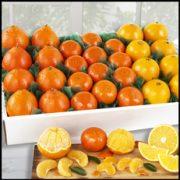 jan-orange-trio__17894.1509049065.231.231